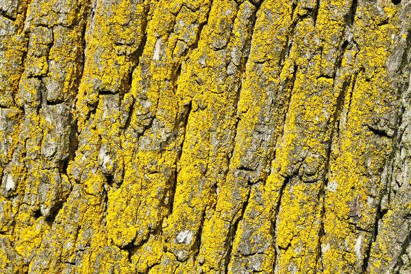 ツリー 樹皮 テクスチャ パターン 背景 木材 ストックフォト © artush