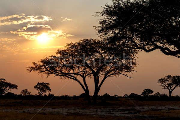 アフリカ 日没 公園 北 ジンバブエ 太陽 ストックフォト © artush