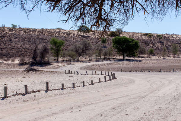 Stock photo: road in Kgalagadi transfontier park