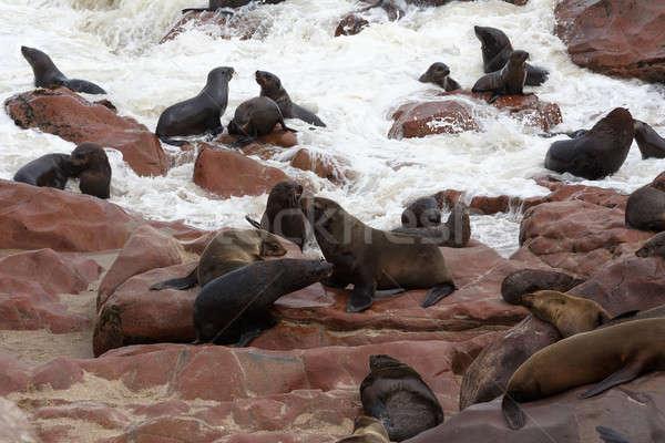 морем крест Намибия живая природа огромный колония Сток-фото © artush