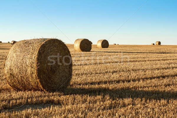 Széna bála előtér vidéki mező narancs Stock fotó © artush