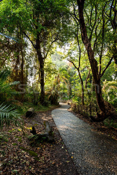 Stock photo: Pathway in a Park Victoria Falls, Zimbabwe in Spring