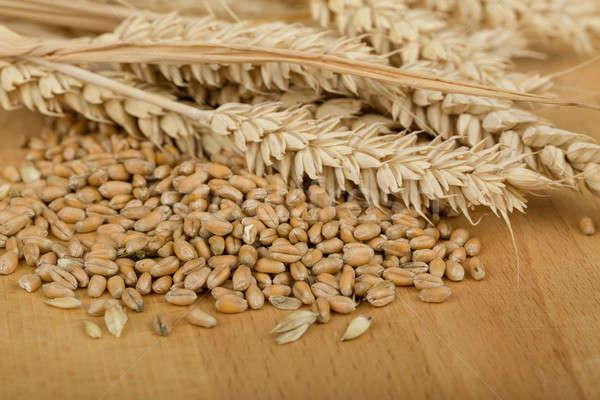 pile of organic whole grain wheat kernels and ears Stock photo © artush