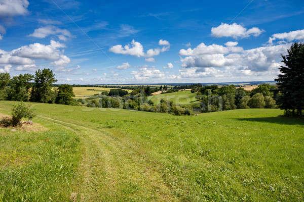 Rural summer landscape  Stock photo © artush