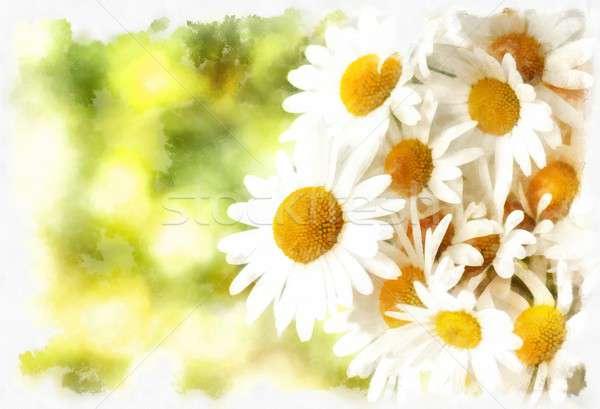 spring daisy flower field vintage Stock photo © artush