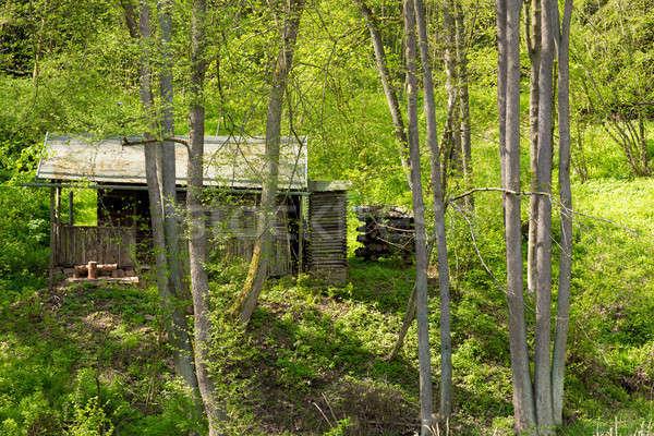 Kunyhó mély zöld erdő magányos vadászat Stock fotó © artush