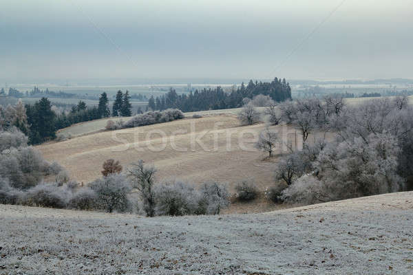 overcast frozen landscape Stock photo © artush