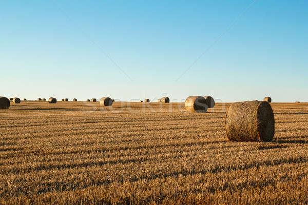 Hooi baal voorgrond landelijk veld oranje Stockfoto © artush