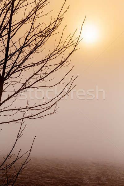 Misty matin sunrise arbre froid chaud Photo stock © artush