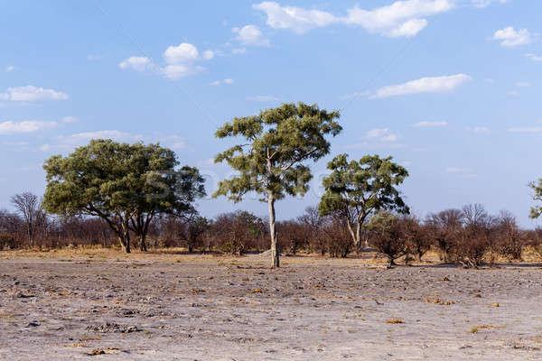 African landscape Stock photo © artush