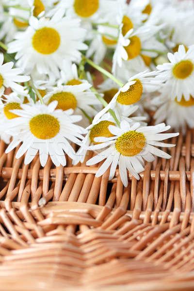 daisy flower with shallow focus Stock photo © artush