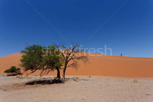 砂丘 ナミビア 枯れ木 ベスト 風景 世界 ストックフォト © artush