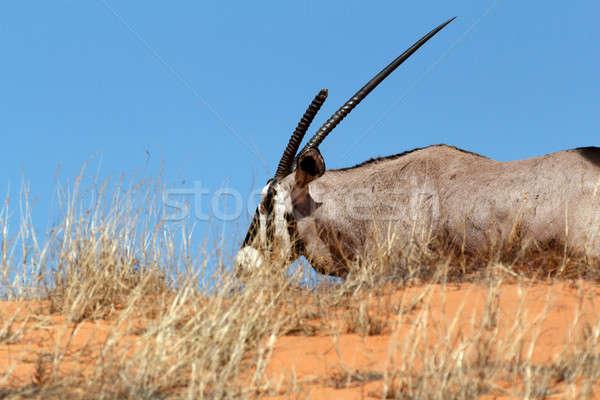 Park Dél-Afrika tájkép háttér sivatag homok Stock fotó © artush