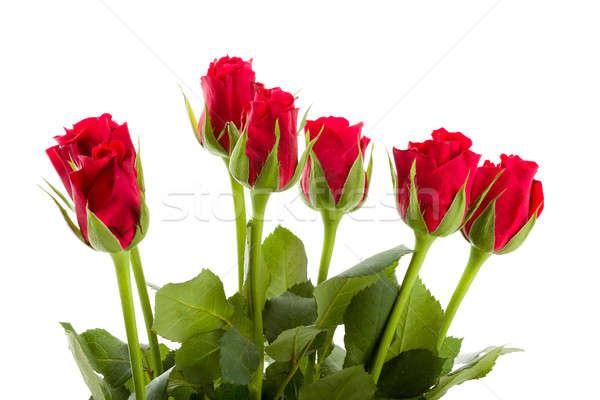 Bukiet świeże red roses odizolowany biały kwiat Zdjęcia stock © artush