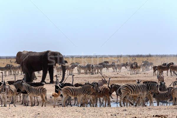 Affollato elefanti zebre parco Namibia fauna selvatica Foto d'archivio © artush