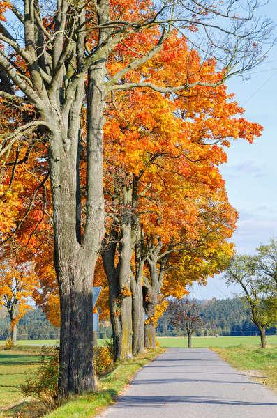 Stockfoto: Najaar · landschap · vallen · gekleurd · bomen · blauwe · hemel