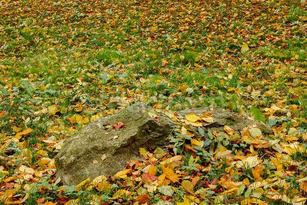 осень оранжевый красный зеленый землю Сток-фото © artush