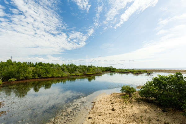 Indonesian landscape with mangrove and walkway Stock photo © artush