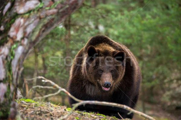 Invierno forestales masculina Europa República Checa Foto stock © artush