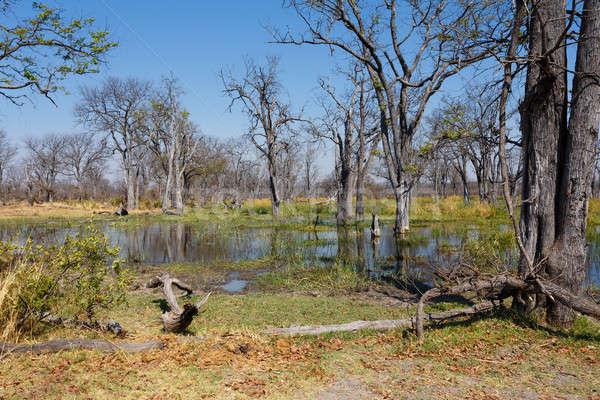 Játék tartalék delta Botswana Afrika gyönyörű Stock fotó © artush