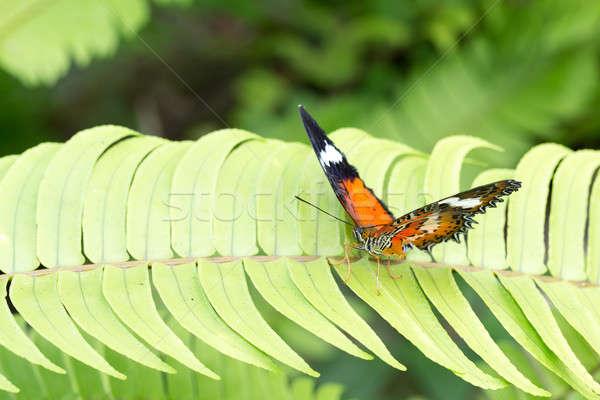 beautiful Monarch Butterfly Stock photo © artush