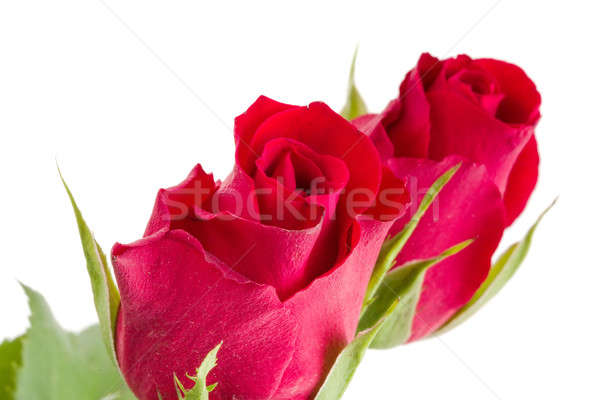 Virágcsokor friss vörös rózsák részlet izolált fehér Stock fotó © artush
