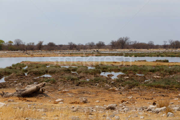 Empty waterhole in namibia game reserve Stock photo © artush
