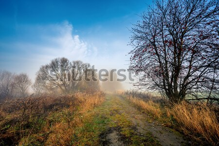 Country road through rich deciduous forest Stock photo © artush