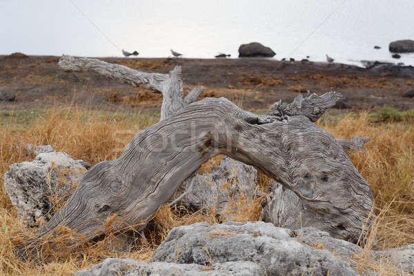 пейзаж Намибия игры резерв парка небе Сток-фото © artush