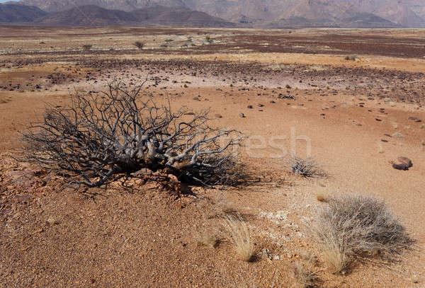 fantrastic Namibia desert landscape Stock photo © artush
