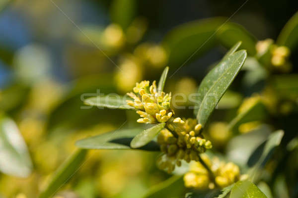 Green spring background with shallow focus Stock photo © artush