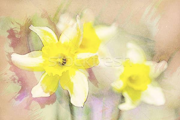 весны нарциссов саду Vintage акварель эффект Сток-фото © artush