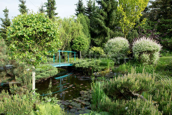 small green footbridge over a pond Stock photo © artush