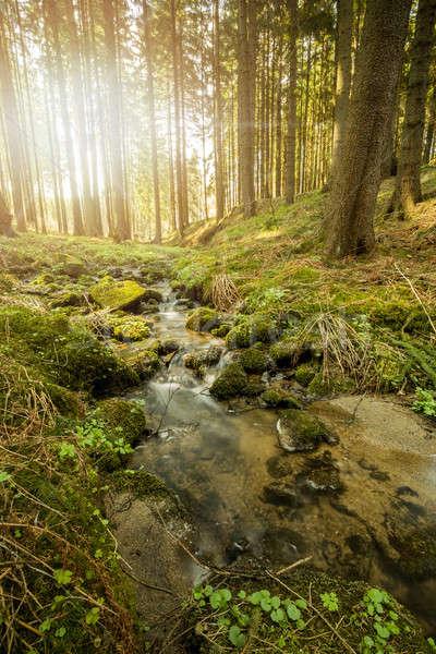 Faible montagne rivière forêt printemps lumière Photo stock © artush