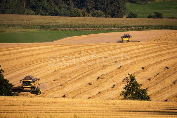 Yellow harvester combine on field harvesting gold wheat Stock photo © artush
