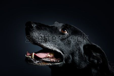 friendly and adorable crossbreed dog Stock photo © artush