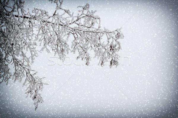 Tak sneeuwval boom natuur landschap schoonheid Stockfoto © artush