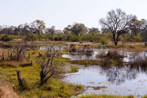 Tájkép gyönyörű víz liliomok delta Botswana Stock fotó © artush