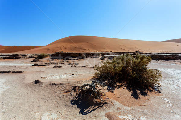 Dune in Hidden Vlei in Namib desert  Stock photo © artush