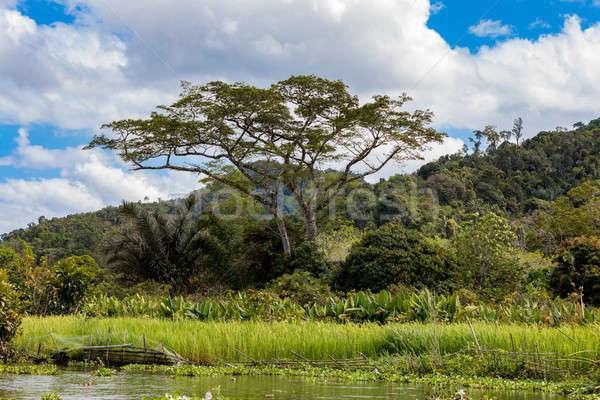 Мадагаскар реке пейзаж дельта большой слон Сток-фото © artush