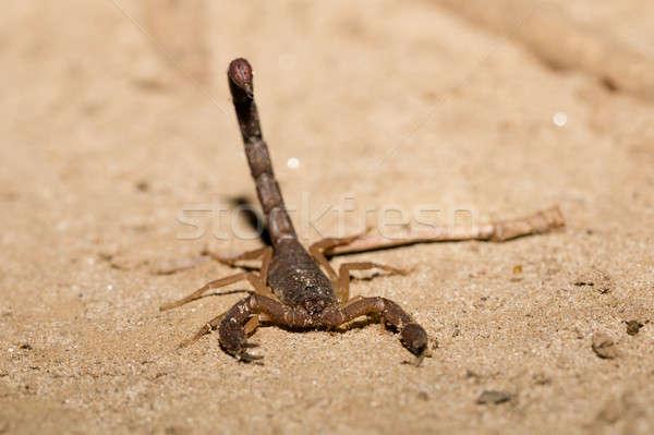 Madagáscar posição pronto atacar ordem parque Foto stock © artush
