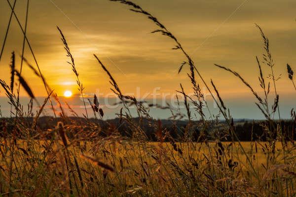Verão pôr do sol campo de grama raso foco céu Foto stock © artush