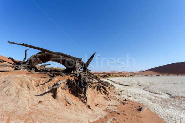Gizlenmiş çöl güzel gündoğumu manzara ölü Stok fotoğraf © artush