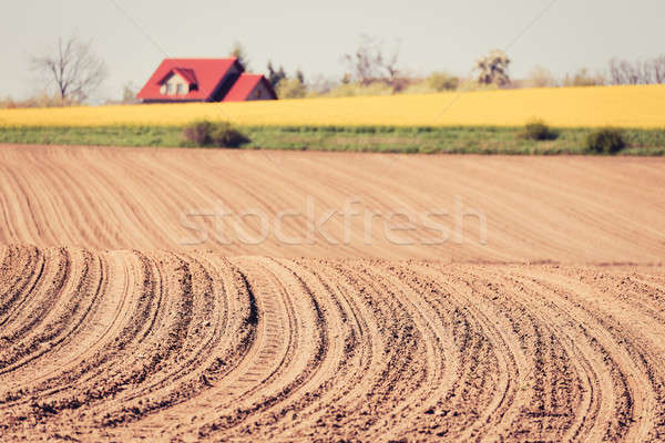 spring plowed field curves Stock photo © artush