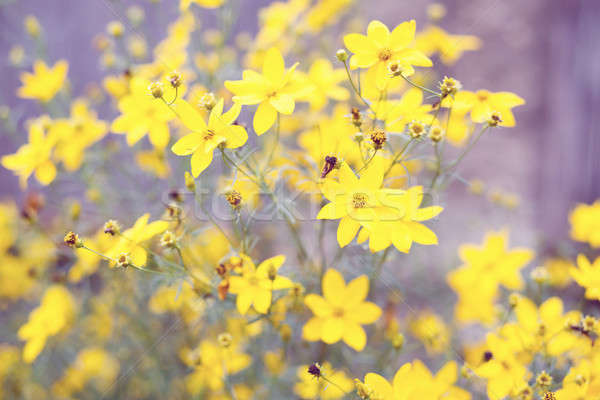 spring flower in garden with shallow focus  Stock photo © artush