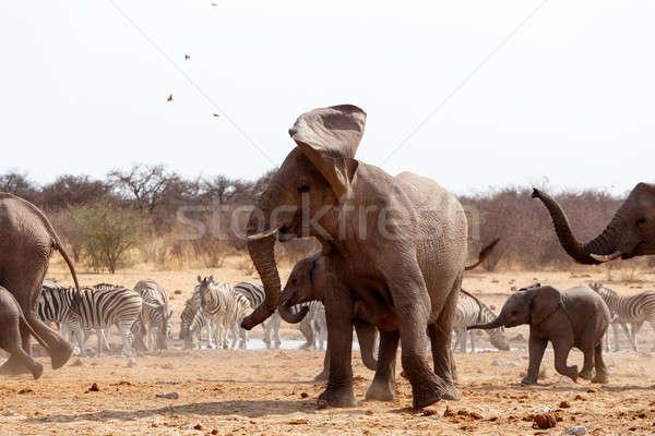 Stok fotoğraf: öfkeli · fil · Afrika · filler · içme