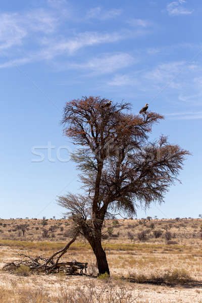 Stock photo: Lonely dead tree with eagle landscape