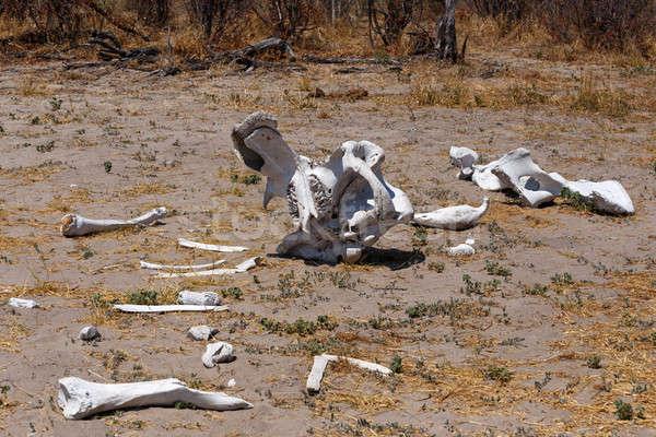 elephant bones in Okavango delta landscape Stock photo © artush