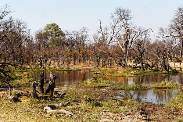 игры резерв пейзаж красивой дельта Ботсвана Сток-фото © artush