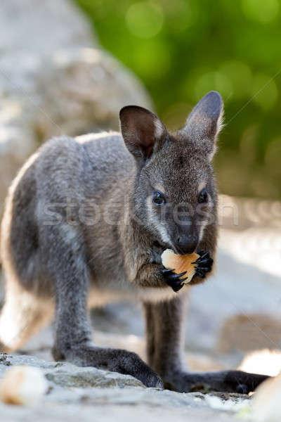 Stok fotoğraf: Bebek · kanguru · çim · saç · arka · plan